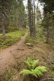 A single alpine path splits in two different directions. It's an. A single alpine path splits  in two different directions. It's an autumnal cloudy day Stock Photo