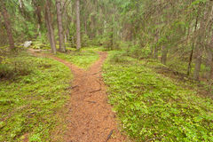 A single alpine path splits in two different directions. It's an. Autumnal cloudy day Royalty Free Stock Photo
