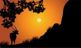 Single antelope silhouette scenery Royalty Free Stock Photo