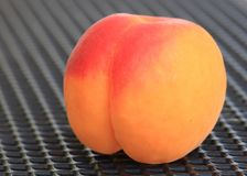 Single apricot in front of a grey metal background royalty free stock photos