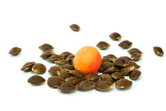 Single Apricot Over Some Kernels Royalty Free Stock Image