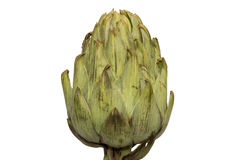 Single artichoke from side view Stock Photography