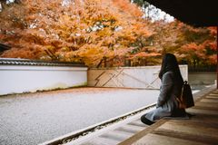 Girl looking at red maple trees in Japanese temple, Kyoto. Single Asian girl sits on wooden floor, back to camera, looks at red maple trees in Japanese temple royalty free stock photos
