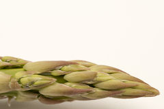 Single asparagus tip isolated on white backgound Royalty Free Stock Images