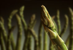 Single asparagus tip with others in background Stock Photo