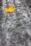 Single Autumn Fall Leaf Rain Wet Weather Background. Single golden Autumn Fall leaf on wet weather rain water backround Stock Photography