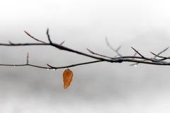 Single autumn leaf Royalty Free Stock Photo