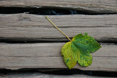 One Autumn Leaf on Weathered Wood. Fall begins and a leaf falls onto worn, weathered gray wood royalty free stock photo