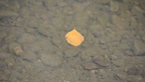 Single autumn leaf floating on calm serene river surface. Background stock video