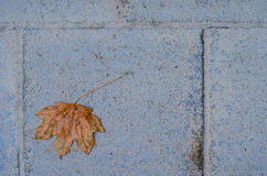 Single autumn leaf on the ground. Single dry reddish autumn leaf on the ground Stock Image