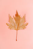 Single autumn leaf on a simple pastel coral background Royalty Free Stock Image