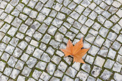 Single autumn maple leaf lying on the stone pavement. Stock Photography