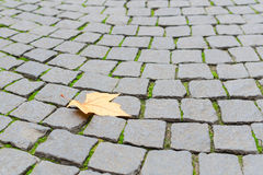 Single autumn maple yellow leaf fall on paved cobblestone paveme Royalty Free Stock Images