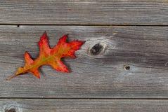 Single Autumn Oak Leaf on Rustic Wood Royalty Free Stock Image