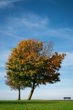 Single autumn tree Stock Images