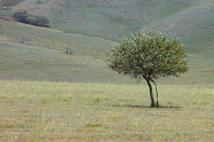 Single autumn trees Royalty Free Stock Photography