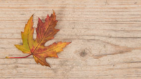 Single autumn yellow and brown maple leaf on wood Stock Photography