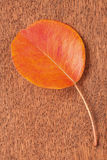 Single autumnal leaf Royalty Free Stock Photography