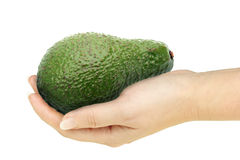 Single avocado in a hand of woman Stock Photos