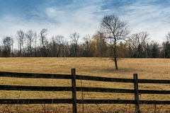 Single bare tree in field. Lone tree in field behind fence, cloudy sky Stock Photos