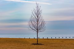 Single Leafless Tree along the Shore of Lake Michigan in Chicago during Winter royalty free stock photos