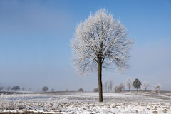 Single bare tree with rime and snow on the branches on a wide wh Royalty Free Stock Image