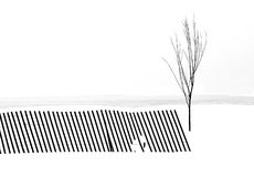 Winter scene of single tree and fence Royalty Free Stock Images