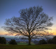 Single bare Winter tree against vibrant sunset Stock Photography