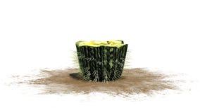 Single Barrel Cactus. Isolated on white background stock illustration