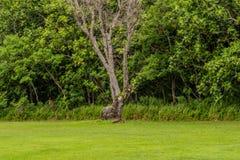 Single barren tree in a meadow Stock Photography