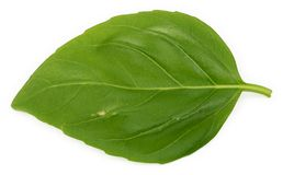 Single basil leaf Royalty Free Stock Photo