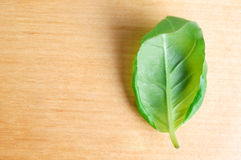 Single Basil Leaf on Wood Royalty Free Stock Image
