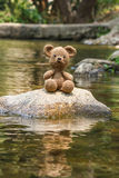 Single bear doll on nature background Stock Image