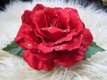 Beautiful pretty red rose flower hair clip. Single beautiful red rose flower hair clip decoration with water droplets on cream fluffy background stock image