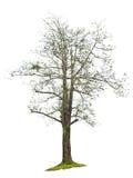 The single beautifull green big tree. Stock Photos