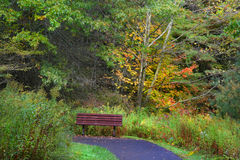 Single Bench In The Forest stock photos
