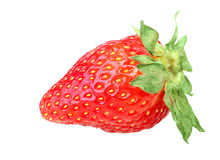 One red berry of fresh strawberry Stock Photography