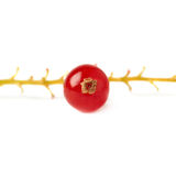 Single berry of Red Currant on branch isolated over white background Stock Photography