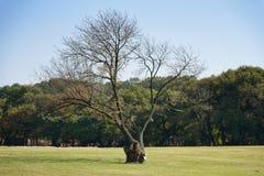 Single big old tree Stock Photo
