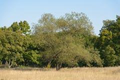 Single big old tree Royalty Free Stock Photos