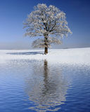 Single big old tree at winter Stock Photos