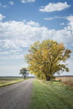 Single big tree with autumn leaves sitting beside a gravel dirt road. stock photos