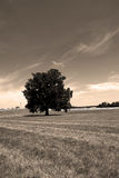 Single big tree Stock Photos