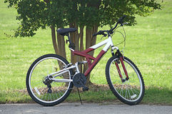 Single Bike Parked By Tree Royalty Free Stock Image