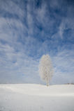 A single birch tree covered with hoarfrost under blue sky and cl Royalty Free Stock Photography