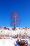 Single Birch Tree at Snowy Slope Landscape Royalty Free Stock Images