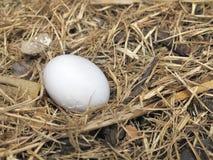 Single Bird egg Stock Images