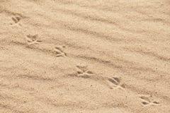 Bird foot print. Single bird foot print on dry sand under sun light Royalty Free Stock Image