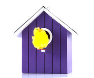 Single bird house Stock Photo