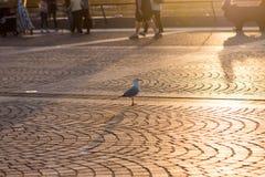A single bird Stock Photo
